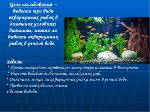 Цель исследования – вывести три вида аквариумных рыбок в домашних условиях; в