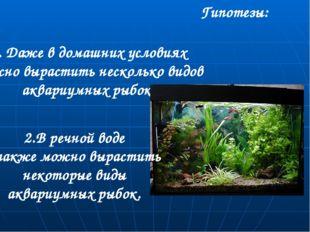 Гипотезы: 1. Даже в домашних условиях можно вырастить несколько видов аквариу