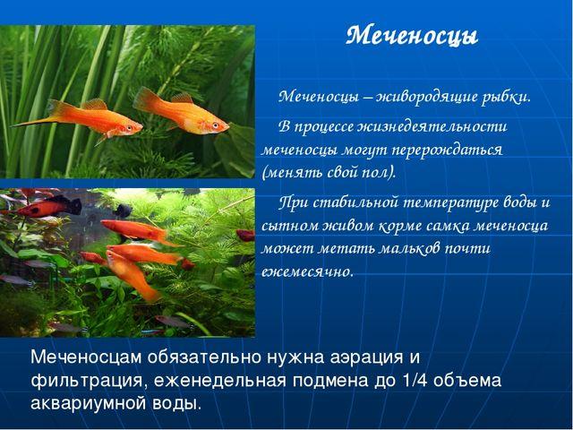 Меченосцы Меченосцы – живородящие рыбки. В процессе жизнедеятельности меченос...