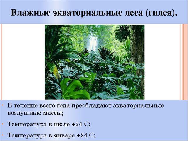 Влажные экваториальные леса (гилея). В течение всего года преобладают экватор...