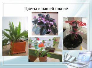 Цветы в нашей школе