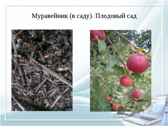 Муравейник (в саду). Плодовый сад