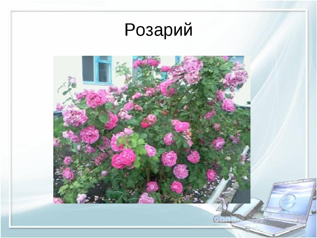 Розарий