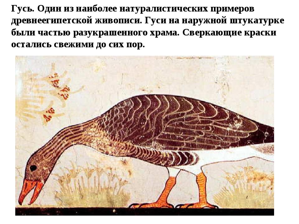 Гусь. Один из наиболее натуралистических примеров древнеегипетской живописи....