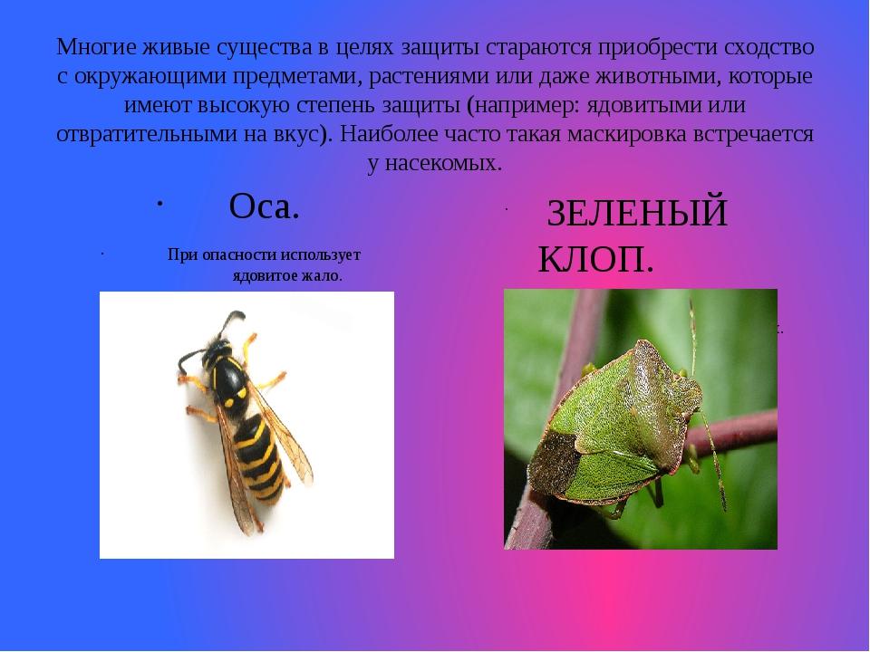Многие живые существа в целях защиты стараются приобрести сходство с окружающ...