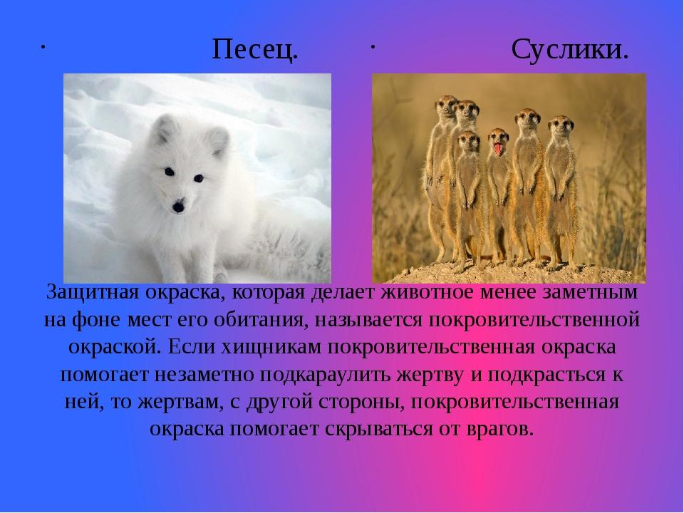 Защитная окраска, которая делает животное менее заметным на фоне мест его оби...