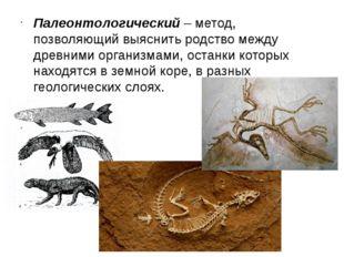 Палеонтологический– метод, позволяющий выяснить родство между древними орган
