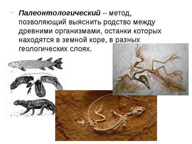 Палеонтологический– метод, позволяющий выяснить родство между древними орган...