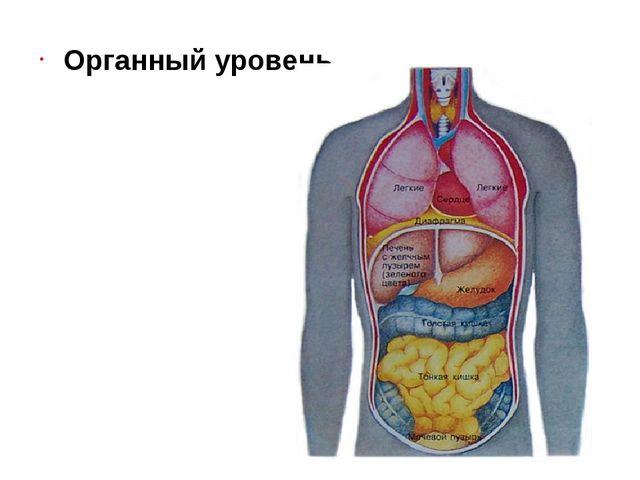 Органный уровень