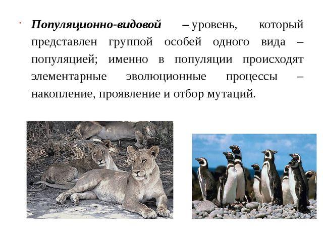 Популяционно-видовой –уровень, который представлен группой особей одного вид...