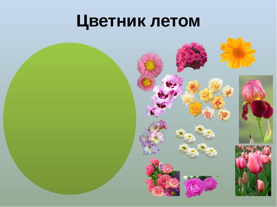 Цветник летом