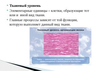 Тканевый уровень Элементарные единицы – клетки, образующие тот или и иной вид