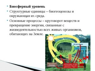 Биосферный уровень Структурные единицы – биогеоценозы и окружающая их среда.