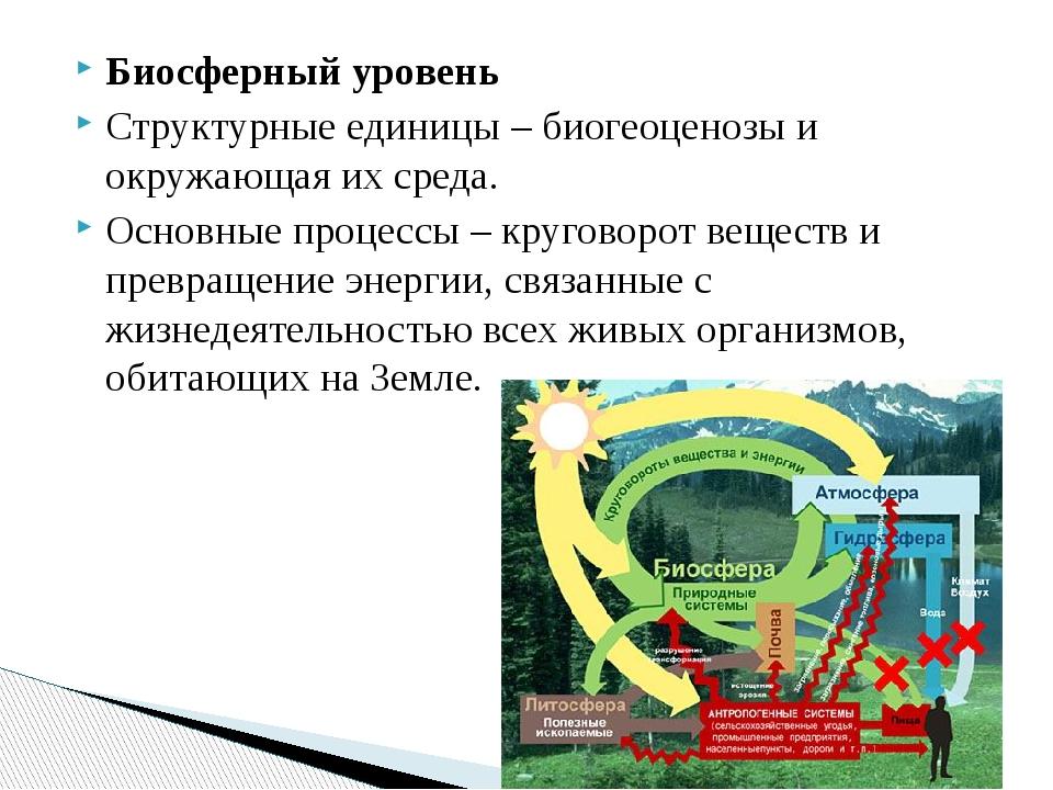 Биосферный уровень Структурные единицы – биогеоценозы и окружающая их среда....