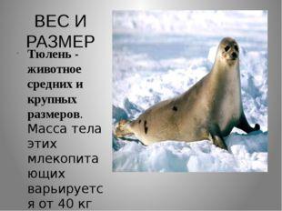 ВЕС И РАЗМЕР Тюлень - животное средних и крупных размеров. Масса тела этих мл