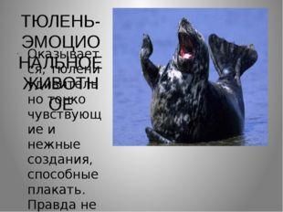 ТЮЛЕНЬ-ЭМОЦИОНАЛЬНОЕ ЖИВОТНОЕ Оказывается, тюлени удивительно тонко чувствующ