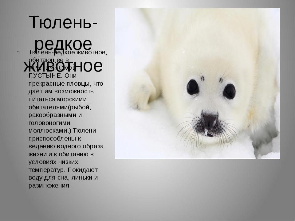 Тюлень-редкое животное Тюлень-редкое животное, обитающее в АРКТИЧЕСКОЙ ПУСТЫН...