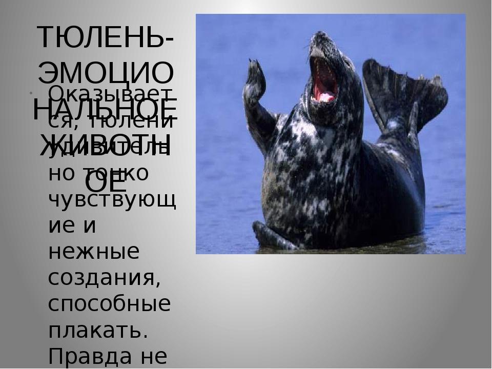 ТЮЛЕНЬ-ЭМОЦИОНАЛЬНОЕ ЖИВОТНОЕ Оказывается, тюлени удивительно тонко чувствующ...