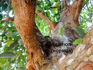 3. Cinnamon (корица)
