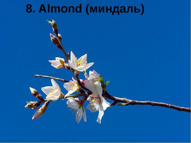 8. Almond (миндаль)
