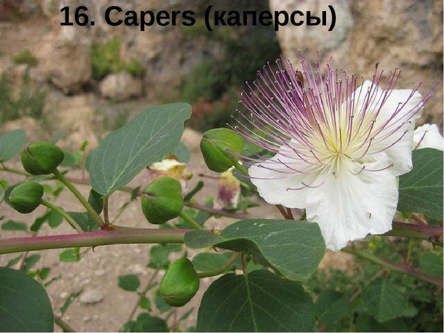 16. Capers (каперсы)