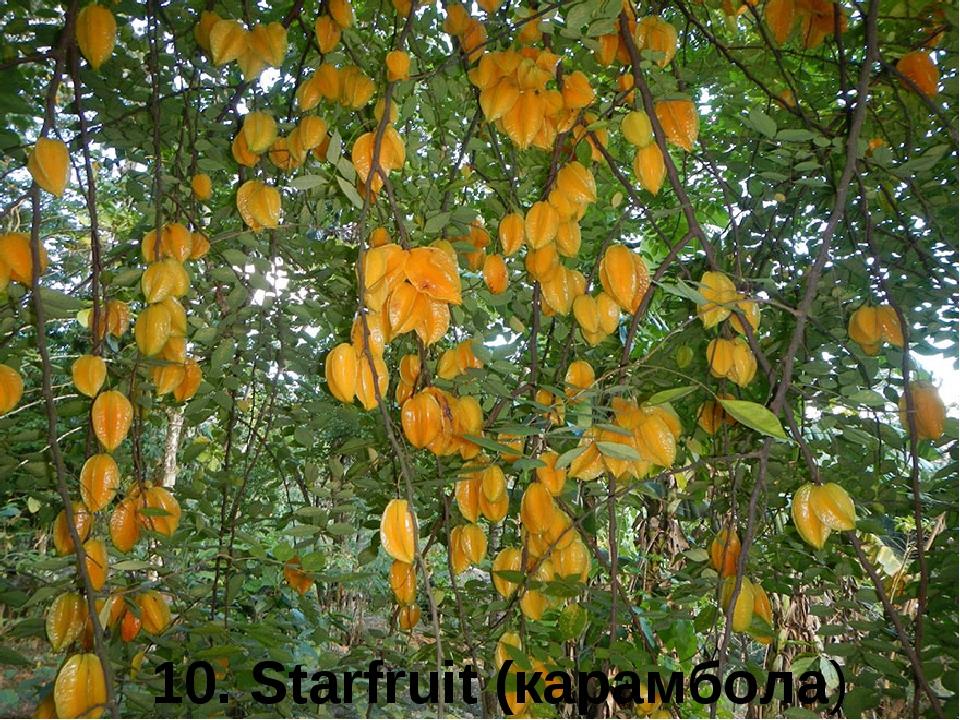 10. Starfruit (карамбола)