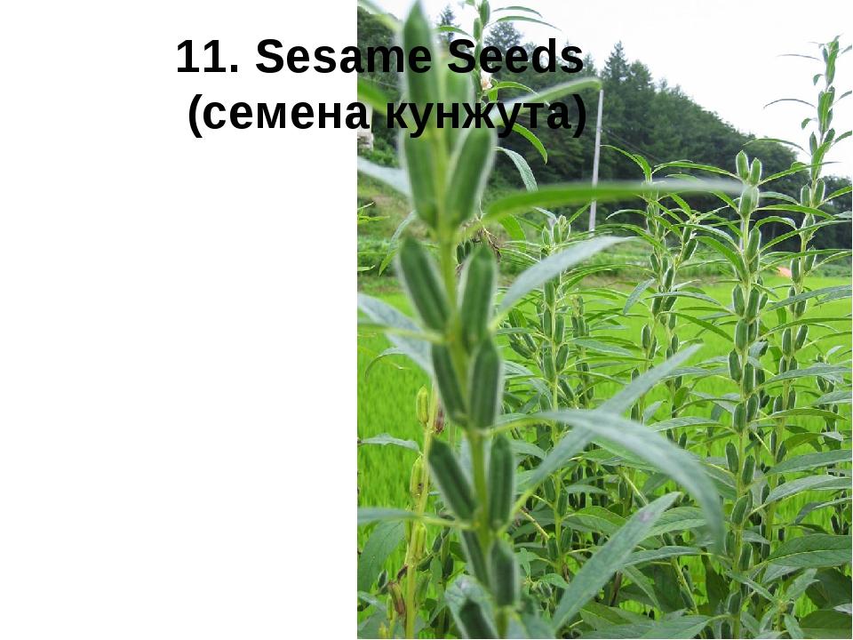 11. Sesame Seeds (семена кунжута)