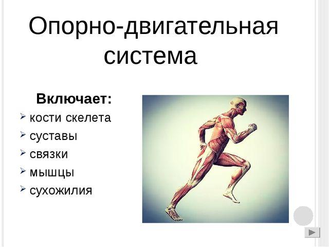 Опорно-двигательная система Включает: кости скелета суставы связки мышцы сух...