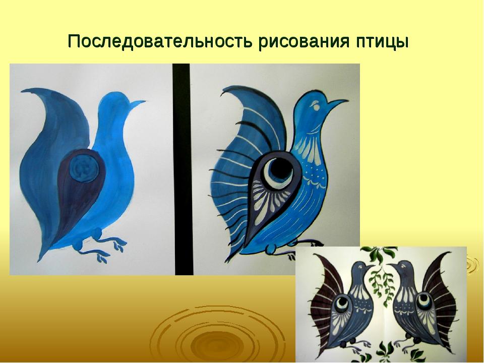 Последовательность рисования птицы