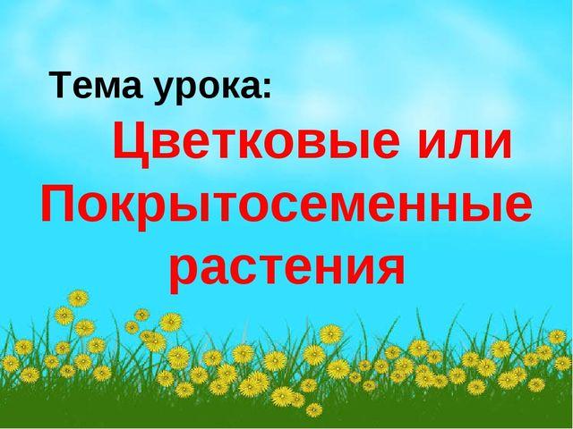Тема урока: Цветковые или Покрытосеменные растения