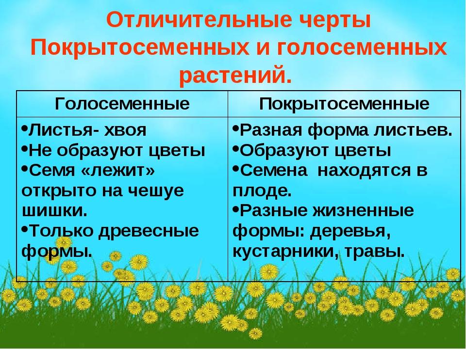 Отличительные черты Покрытосеменных и голосеменных растений. ГолосеменныеПок...