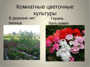 Комнатные цветочные культуры В деревне нет оконца Без этого цветка Герань , б