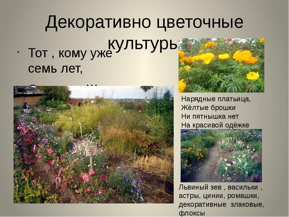 Декоративно цветочные культуры Тот , кому уже семь лет, Скажет: «Школа, здрав...
