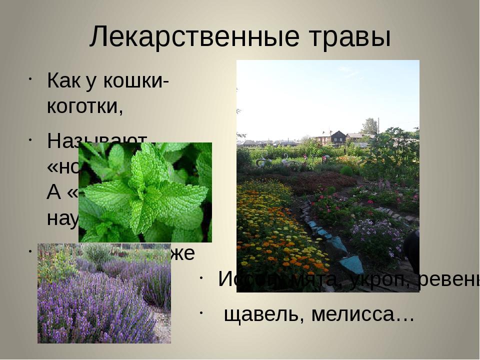 Лекарственные травы Как у кошки- коготки, Называют «ноготки» А «календулой на...