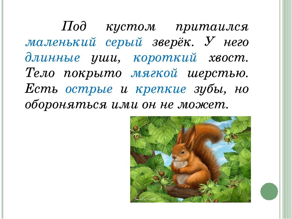 Под кустом притаился маленький серый зверёк. У него длинные уши, короткий...
