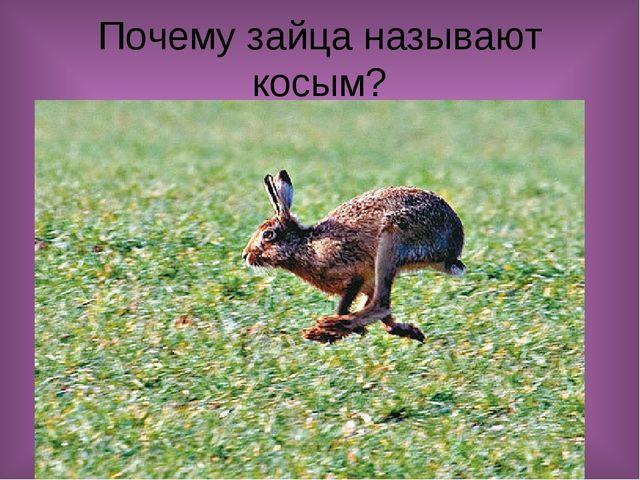 Почему зайца называют косым?