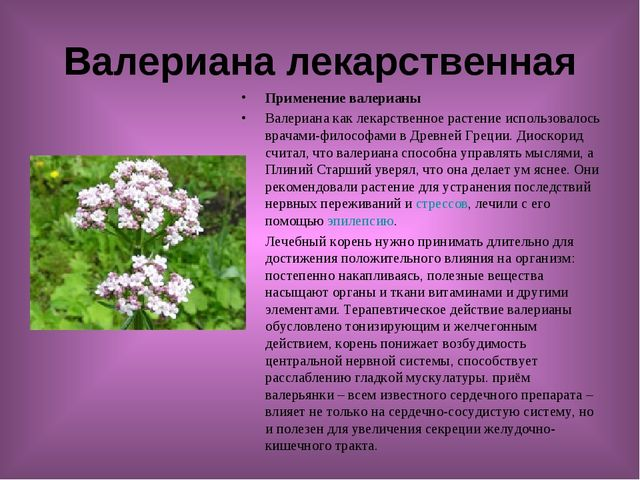 Валериана лекарственная Применение валерианы Валериана как лекарственное раст...