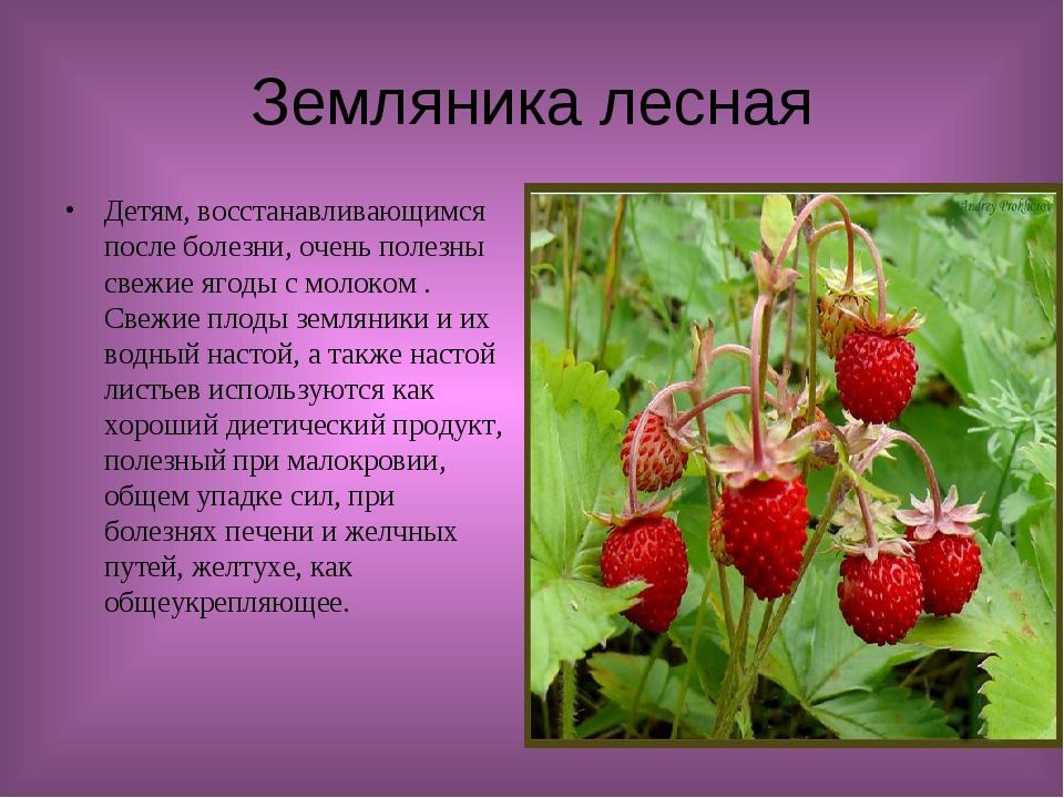 Земляника лесная Детям, восстанавливающимся после болезни, очень полезны свеж...