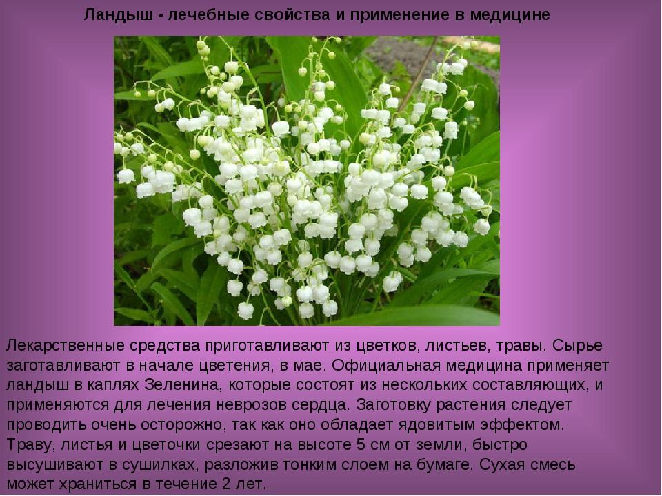 Ландыш - лечебные свойства и применение в медицине Лекарственные средства при...