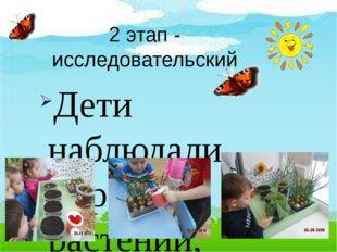 2 этап - исследовательский Дети наблюдали за ростом растений, проводили опыты