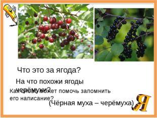 Что это за ягода? На что похожи ягоды черёмухи? Как слово может помочь запомн