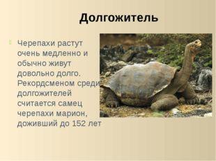 Черепахи растут очень медленно и обычно живут довольно долго. Рекордсменом ср