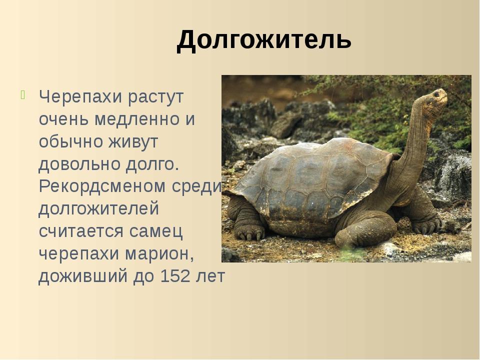 Черепахи растут очень медленно и обычно живут довольно долго. Рекордсменом ср...