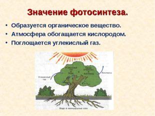 Значение фотосинтеза. Образуется органическое вещество. Атмосфера обогащается
