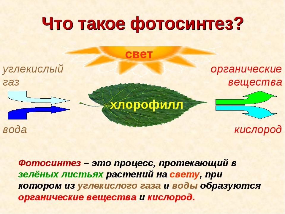 всей краткое сообщение о фотосинтезе ладно