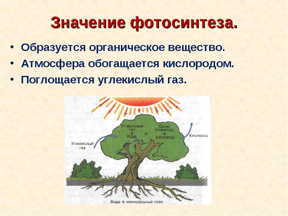 Значение фотосинтеза. Образуется органическое вещество. Атмосфера обогащается...
