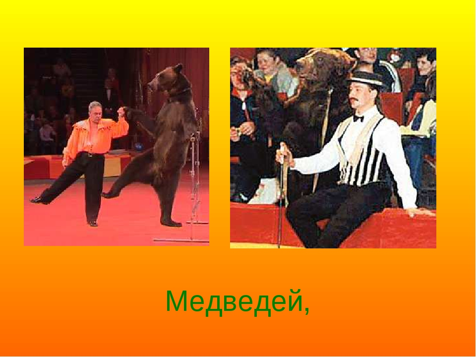 Медведей,