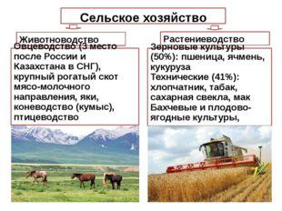 Сельское хозяйство Растениеводство Животноводство Зерновые культуры (50%): пш
