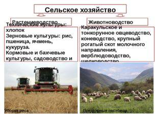 Сельское хозяйство Растениеводство Животноводство Каракульское и тонкорунное