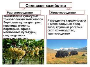 Сельское хозяйство Растениеводство Животноводство Разведение каракульских и м